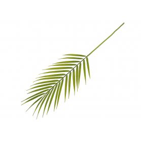 Liść Palmy gumowany 50967