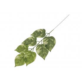 Liść lipy ciemna zieleń