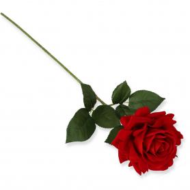 Róża Velvet pojedyncza 51442