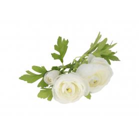 Pełnik kwitnący gałązka 55625