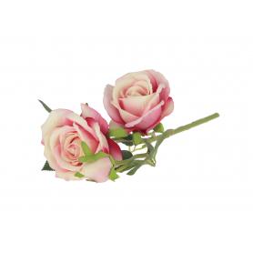 Róża welurowa 57251