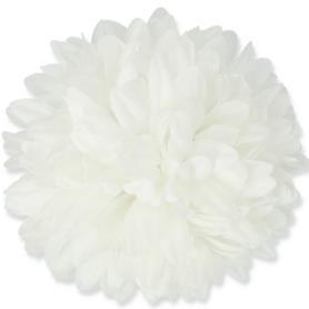Chryzantema główka kwiatowa  54396 0071