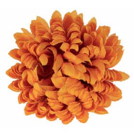 Chryzantema Ananas główka kwiatowa 54368 777
