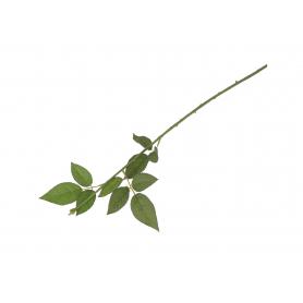 Łodyga do Róży