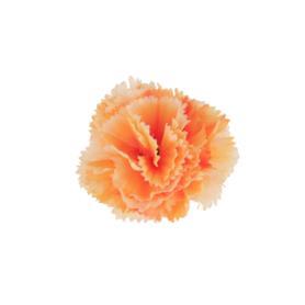 Goździk główka kwiatowa 50457-16