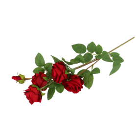 Róża welurowa x5 24/192 59402 E69