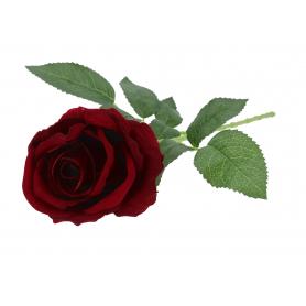 Róża pojojedyncza velvet 51616C13