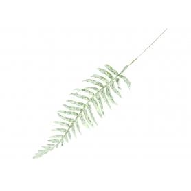 Liść Paproci 55492