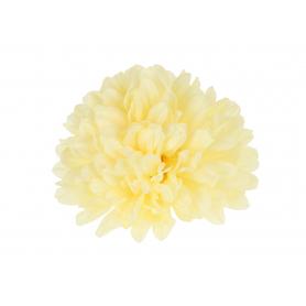 Chryzantema główka kwiatowa
