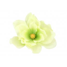 Magnolia główka kwiatowa 54917 DL2010