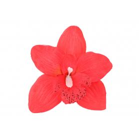 Storczyk główka kwiatowa