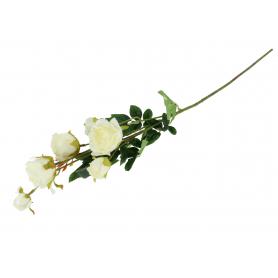Róża gałązka  58865