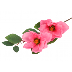 Magnolia gałązka  57757