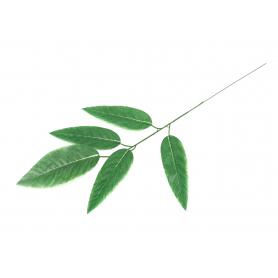 Liść Mango 57390