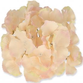Hortensja główka kwiatowa 5097729