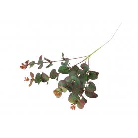 Gałązka Eukaliptusa 56658
