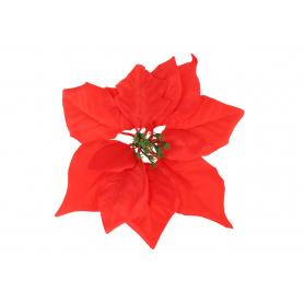 Gwiazda Betlejemska główka kwiatowa 56663red