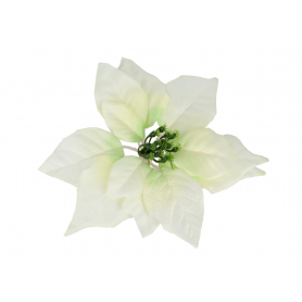 Gwiazda Betlejemska główka kwiatowa 56663cream