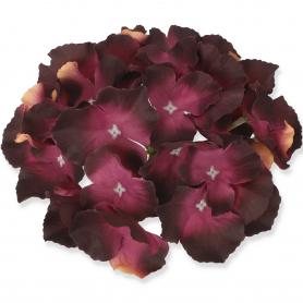 Hortensja główka kwiatowa 509776
