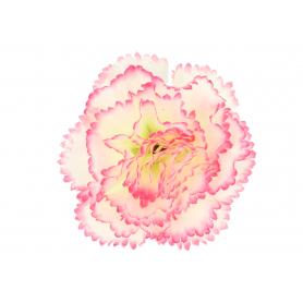Goździk główka kwiatowa 58886