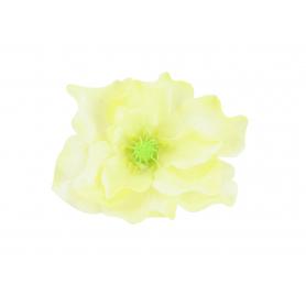 Magnolia główka kwiatowa  P008A