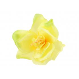 Amarylis główka kwiatowa 55010-tt.green