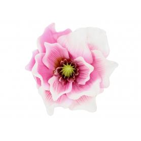 Magnolia główka kwiatkowa  P008