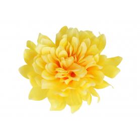 Dalia główka kwiatowa 5952728