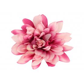 Dalia główka kwiatowa 5952726