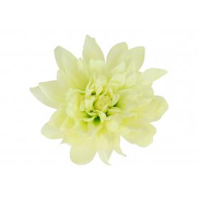 Dalia główka kwiatowa 5952703