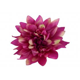 Dalia główka kwiatowa 5952725