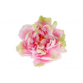 Piwonia główka kwiatowa