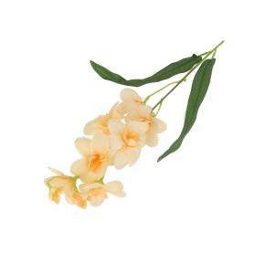 Storczyk Dendrobium gałązka 50588