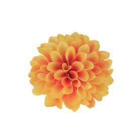 Cynia główka kwiatowa 52049-6