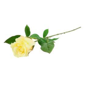 Róża pojedyncza 60cm 50411 SUN411