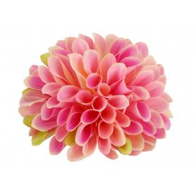 Cynia główka kwiatowa 52049-20