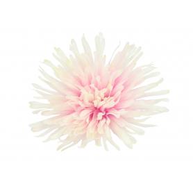 Chryzantema postrzępiona główka kwiatowa 53719 FS016