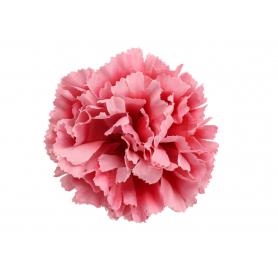 Goździk główka kwiatowa