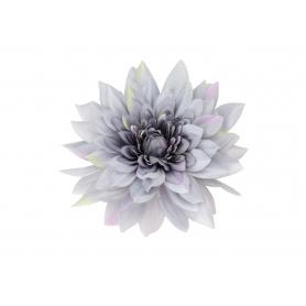Dalia główka kwiatowa 55775