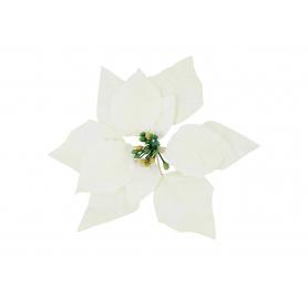 Gwiazda Betlejemska główka kwiatowa 55799