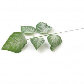 Liść Magnolii ciemno zielony z białymi elementami