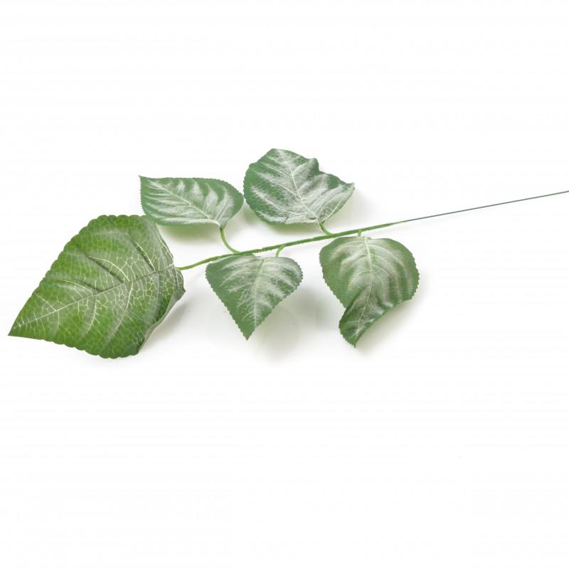 Liść magnolia ciemny zielony z białymi elementami