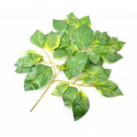 Liść zielony