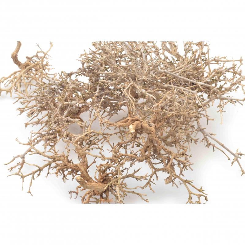 Tw.sztuczne Dry tree brown